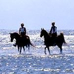 jezdci na koních v moři